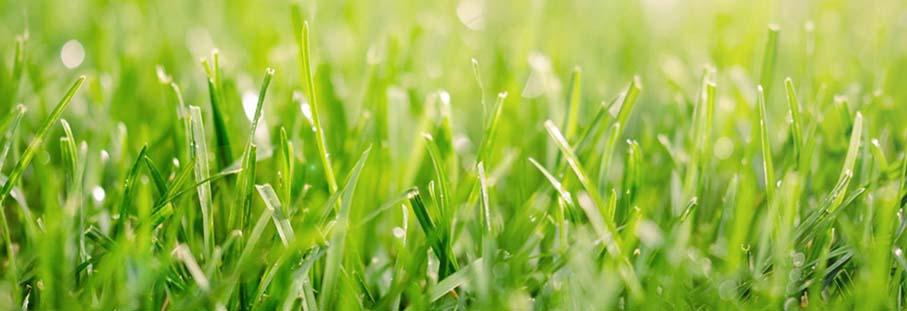 a quale altezza tagliare l'erba del prato