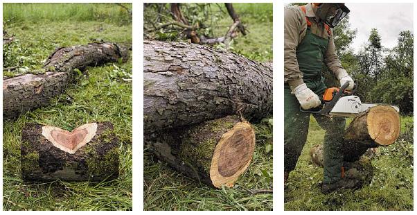 tagliare legna da ardere