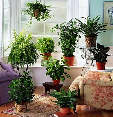 illuminazione piante in casa