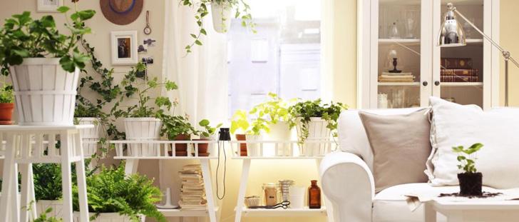 Piante e fiori in casa