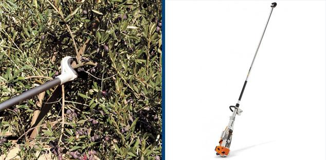 raccolta olive scrollatura stihl
